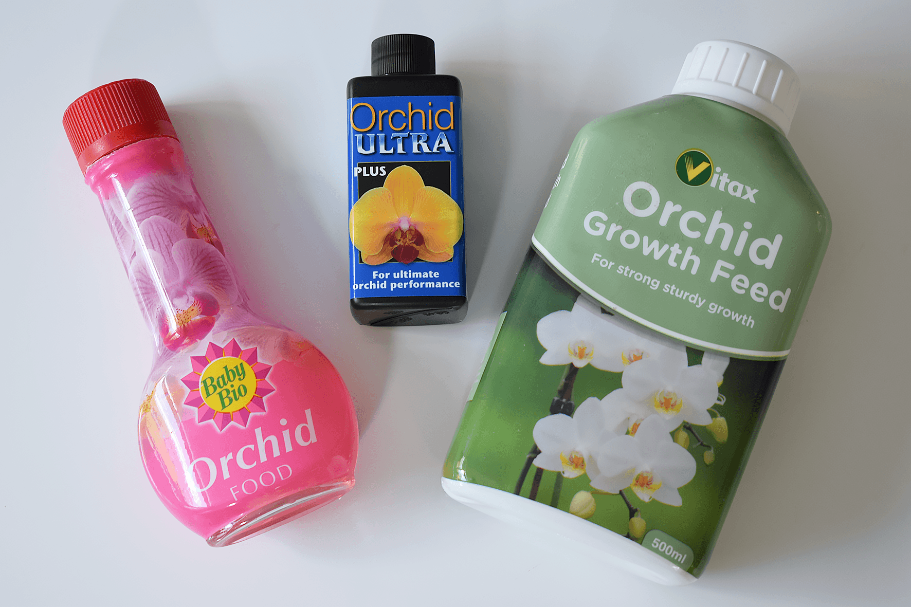 How To Rebloom And Care For Orchids Caradise